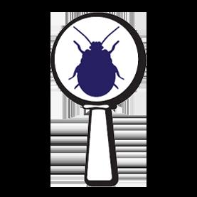 pest-control-inspection-tech