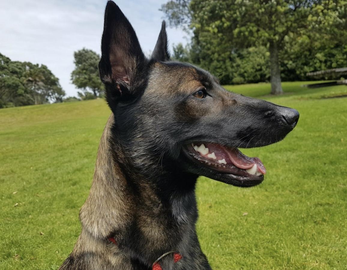police dog refresher training